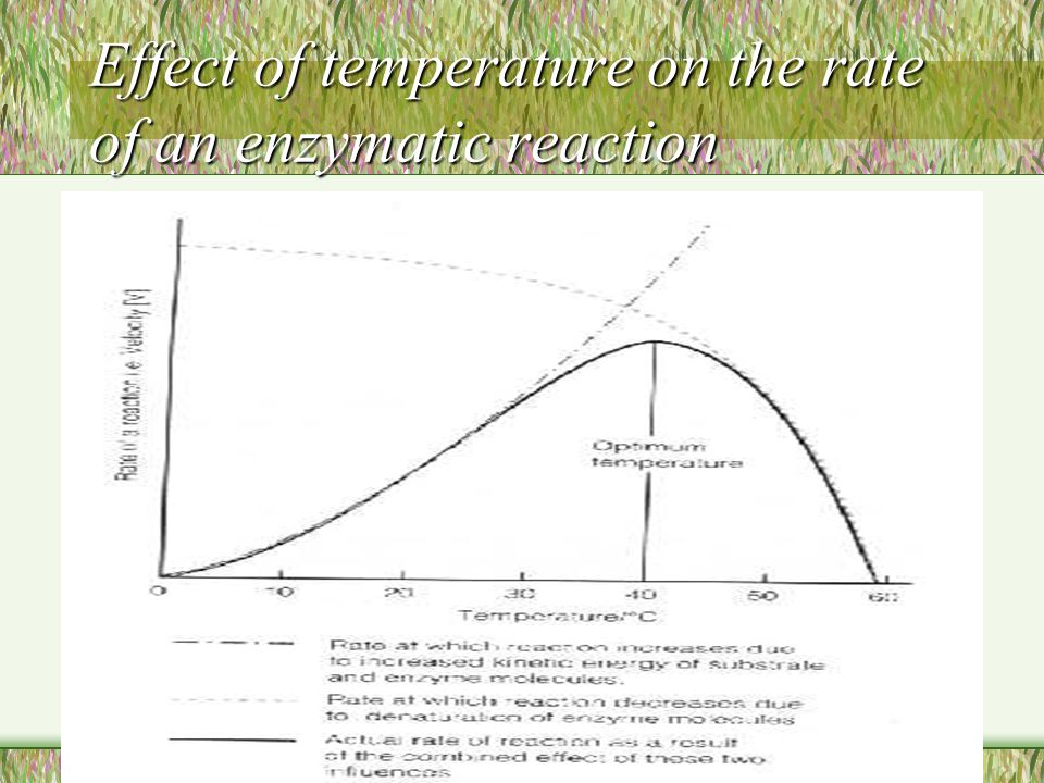 Effect of temperature on the rate of an enzymatic reaction