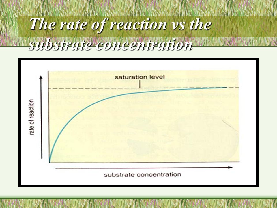 The rate of reaction vs the substrate concentration