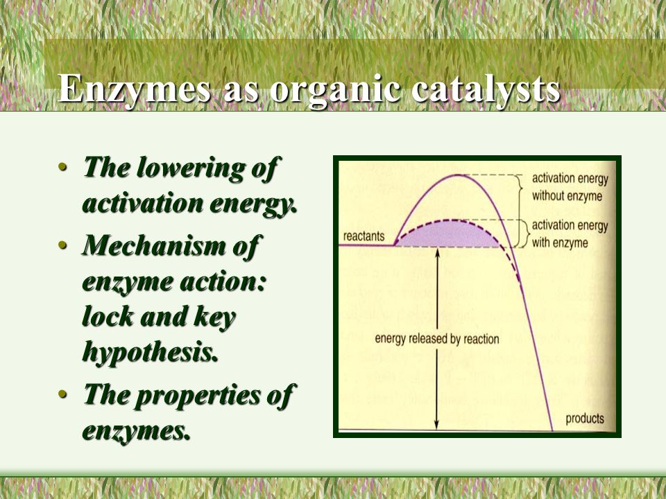 Enzymes as organic catalysts