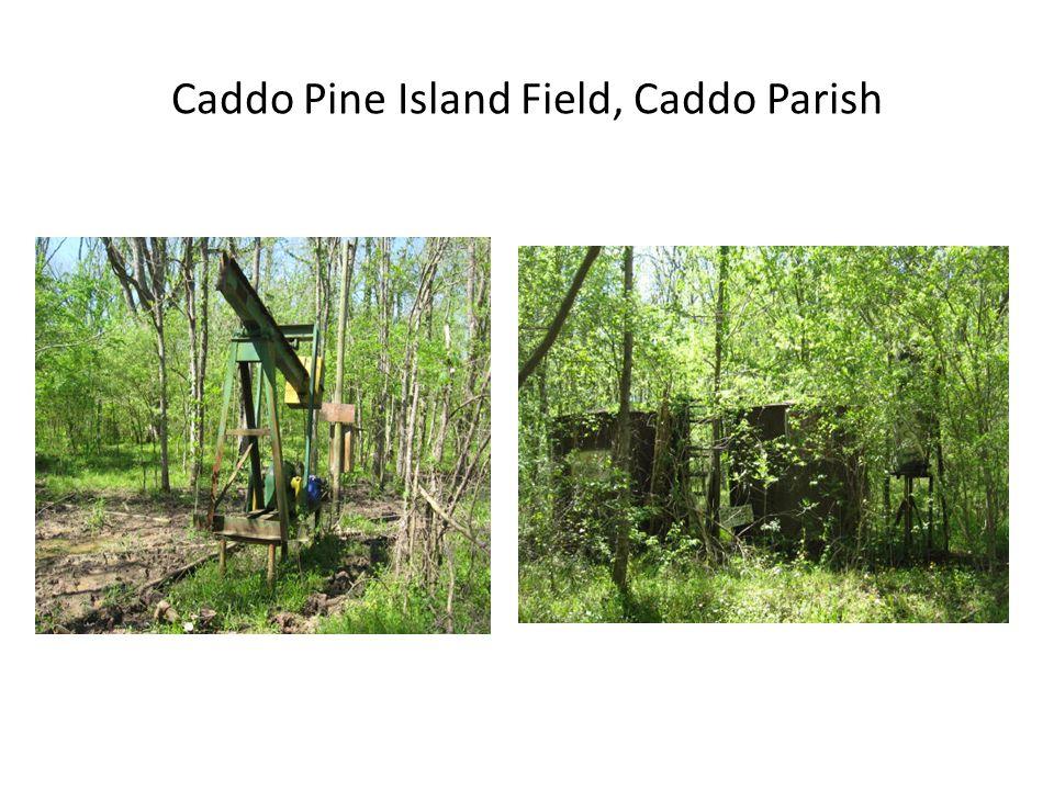 Caddo Pine Island Field, Caddo Parish