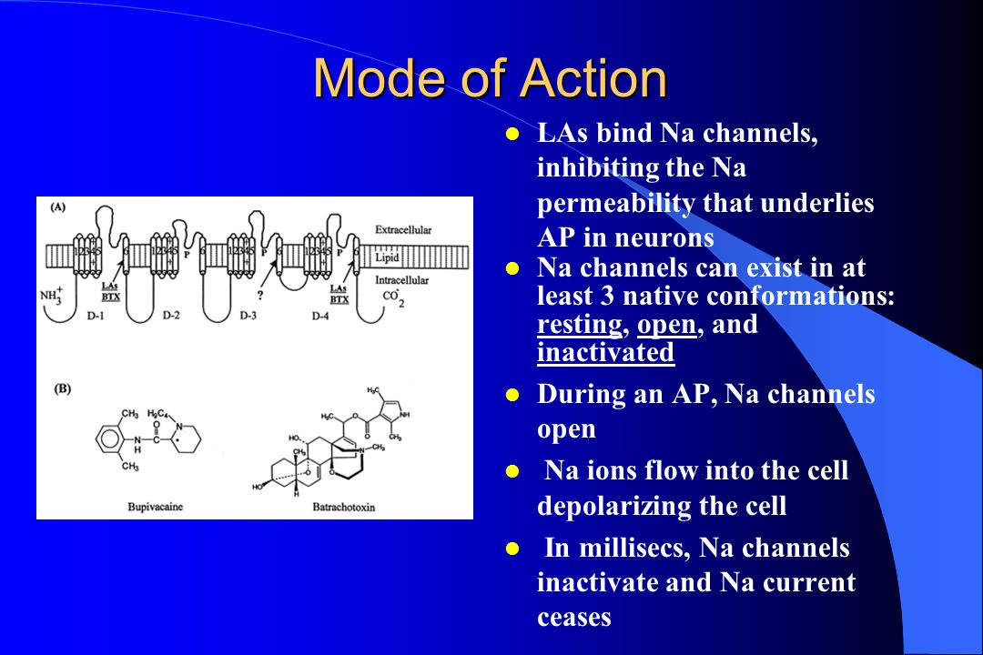 Mode of Action LAs bind Na channels, inhibiting the Na permeability that underlies AP in neurons.