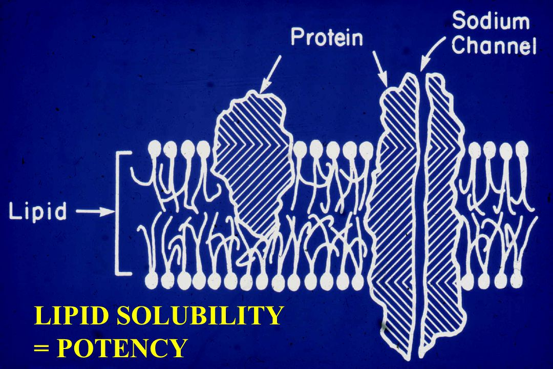 LIPID SOLUBILITY = POTENCY