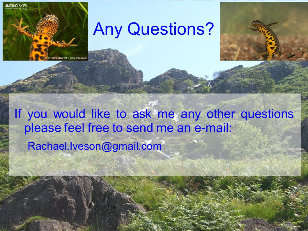 Any Questions If you would like to ask me any other questions please feel free to send me an e-mail:
