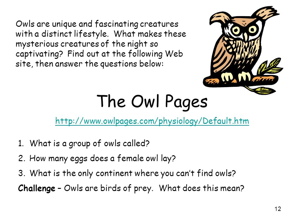 Owls are unique and fascinating creatures with a distinct lifestyle