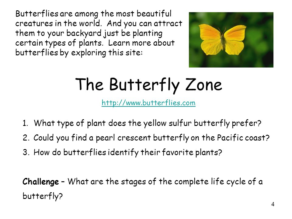 Butterflies are among the most beautiful creatures in the world