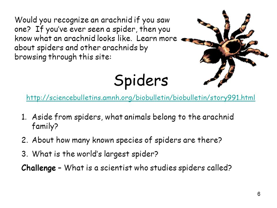 Would you recognize an arachnid if you saw one