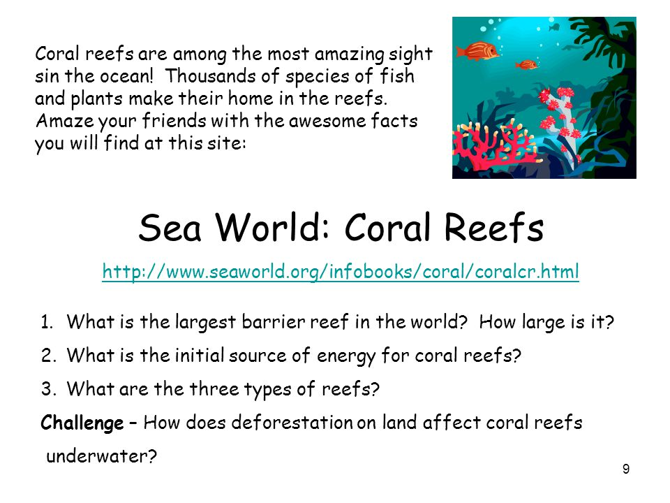 Coral reefs are among the most amazing sight sin the ocean