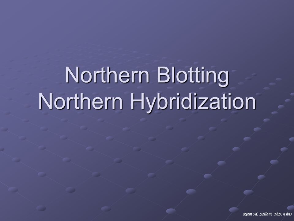 Northern Blotting Northern Hybridization