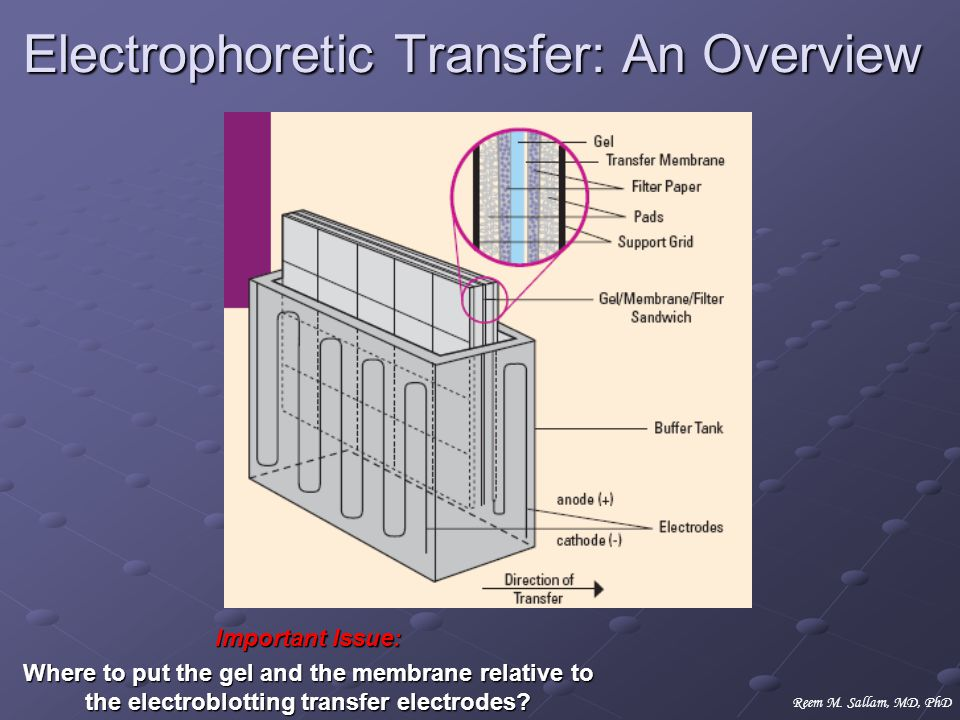Electrophoretic Transfer: An Overview