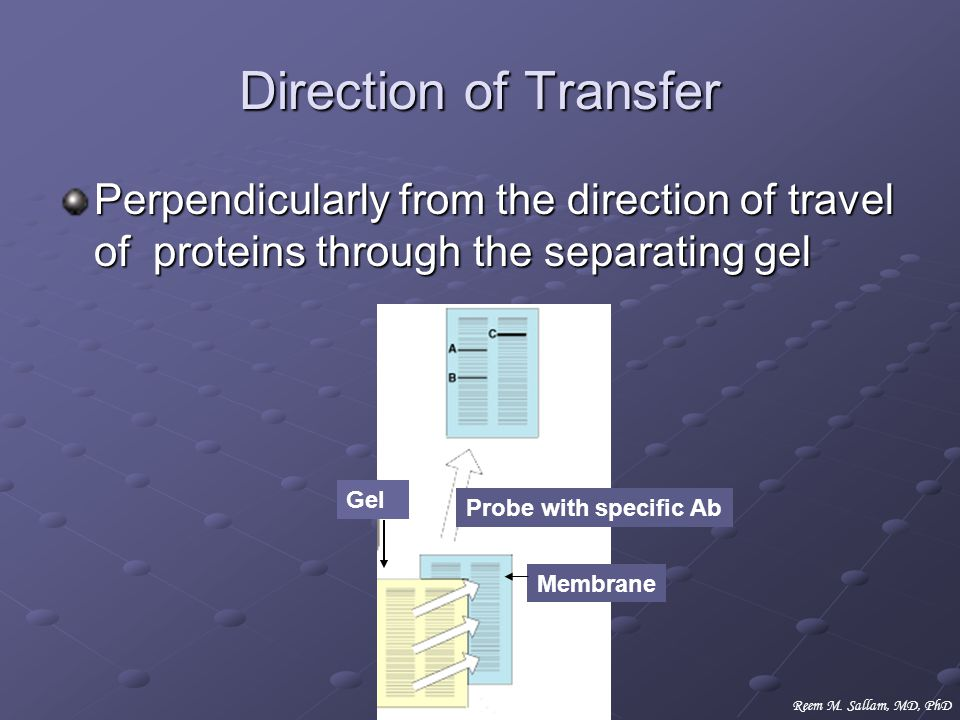 Direction of Transfer Perpendicularly from the direction of travel of proteins through the separating gel.