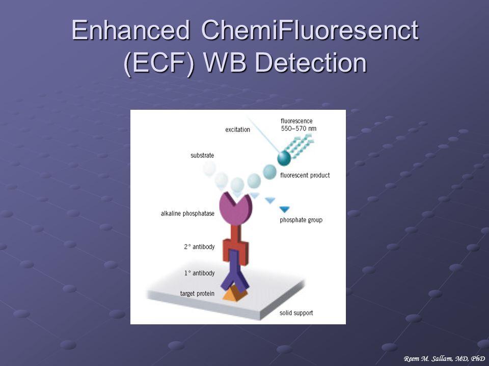 Enhanced ChemiFluoresenct (ECF) WB Detection