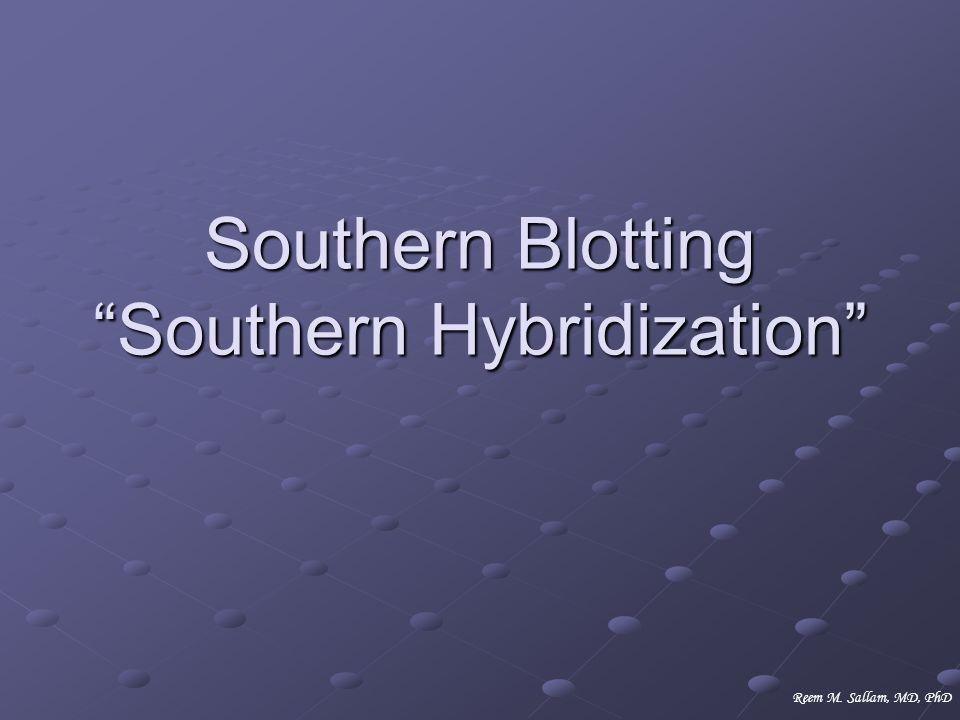 Southern Blotting Southern Hybridization