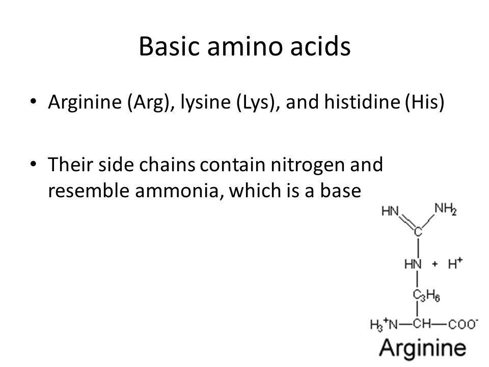 Basic amino acids Arginine (Arg), lysine (Lys), and histidine (His)