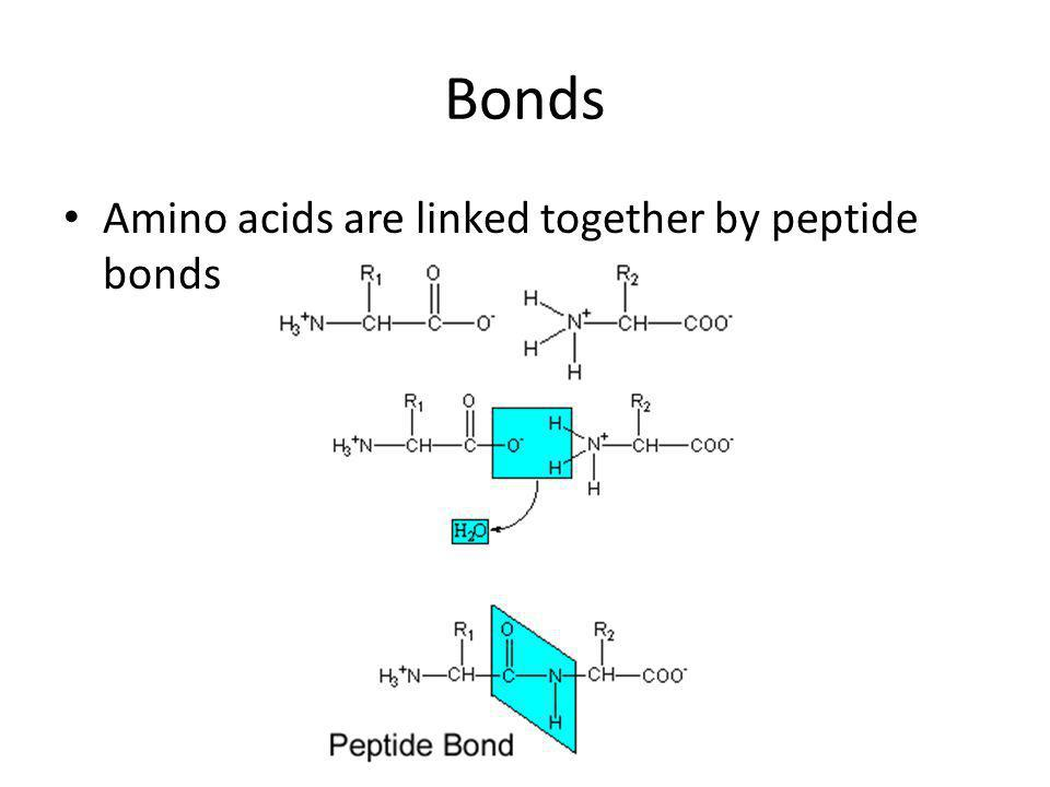 Bonds Amino acids are linked together by peptide bonds