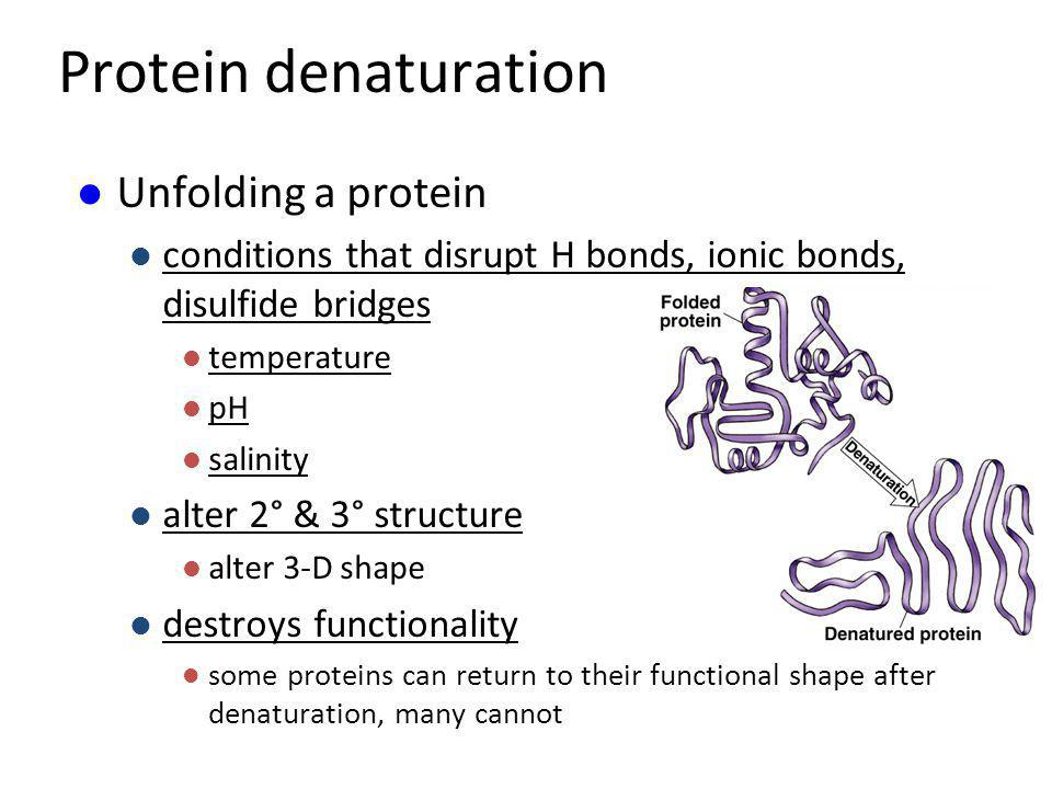 Protein denaturation Unfolding a protein