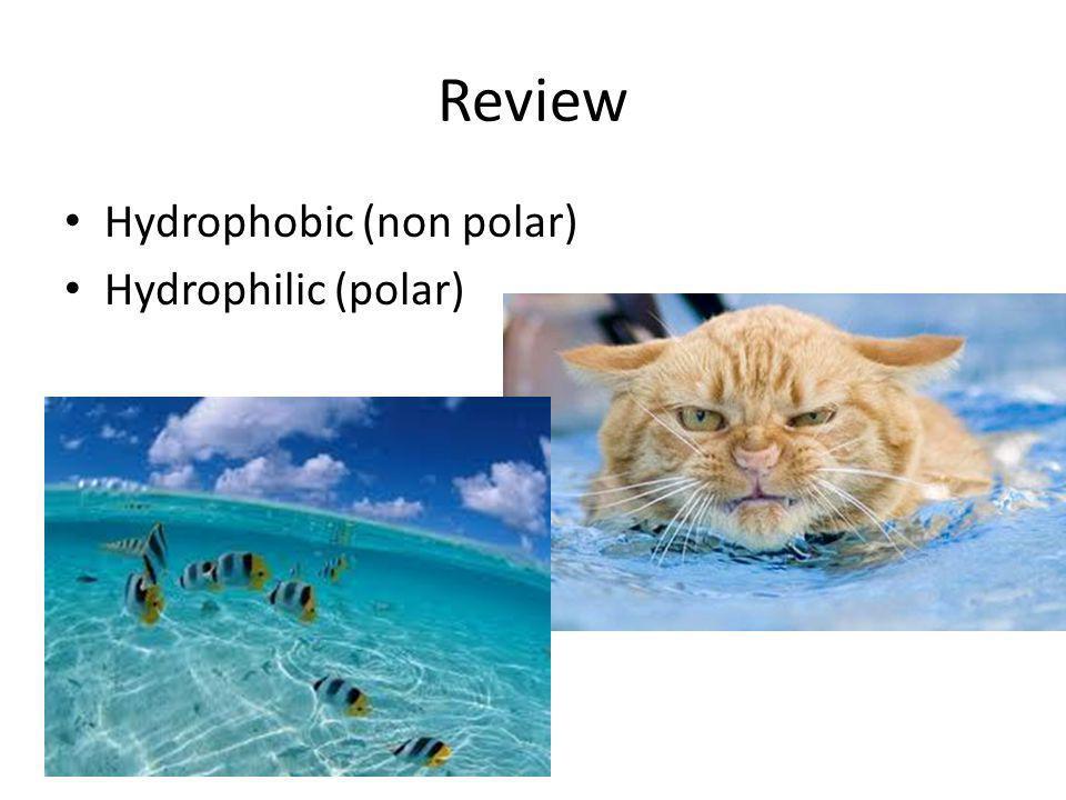 Review Hydrophobic (non polar) Hydrophilic (polar)