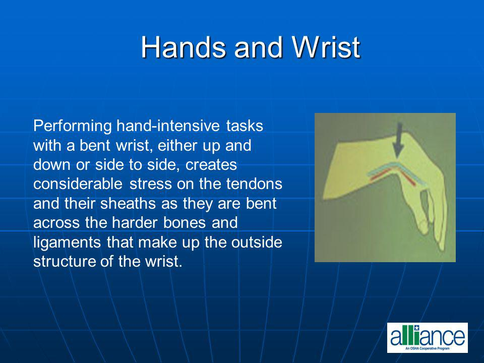 Hands and Wrist