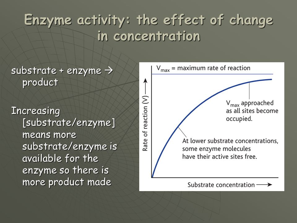 Introduction to Enzymes