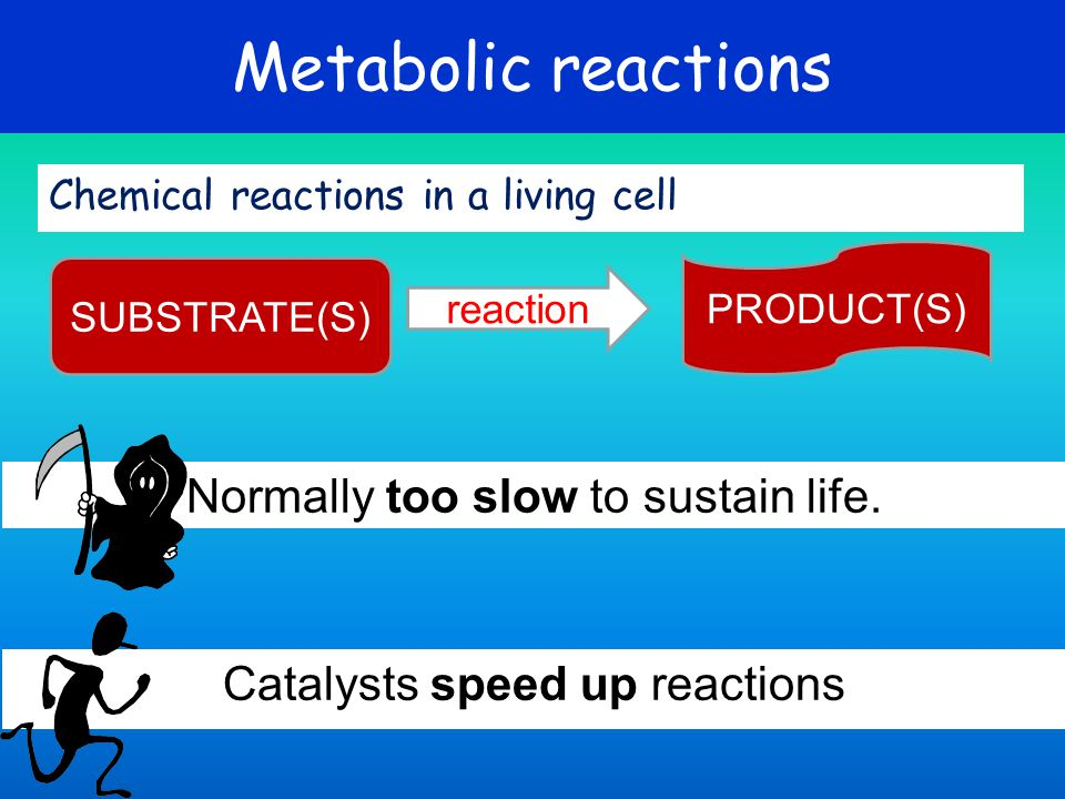Metabolic reactions Normally too slow to sustain life.