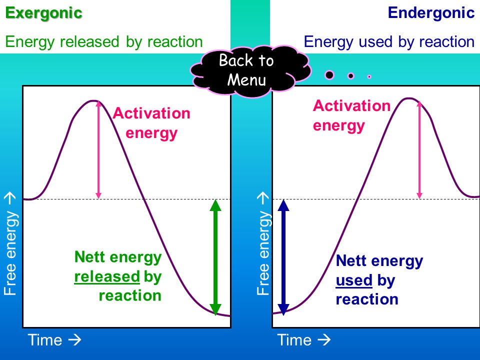 Exergonic Energy released by reaction. Endergonic. Energy used by reaction. Back to Menu. Activation.