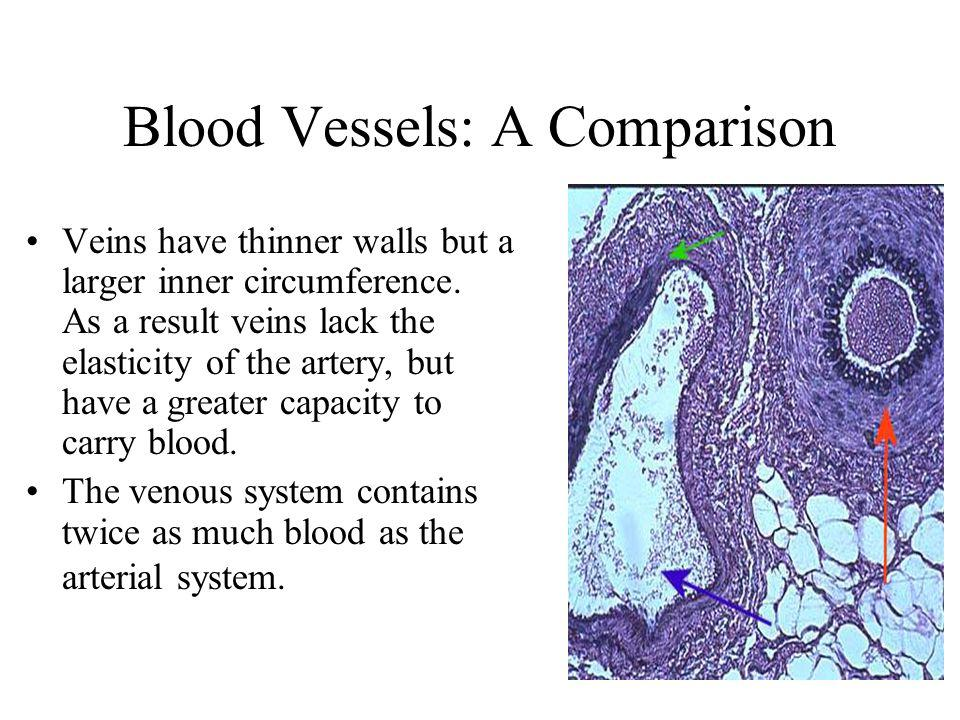 Blood Vessels: A Comparison