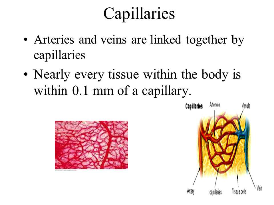 Capillaries Arteries and veins are linked together by capillaries.