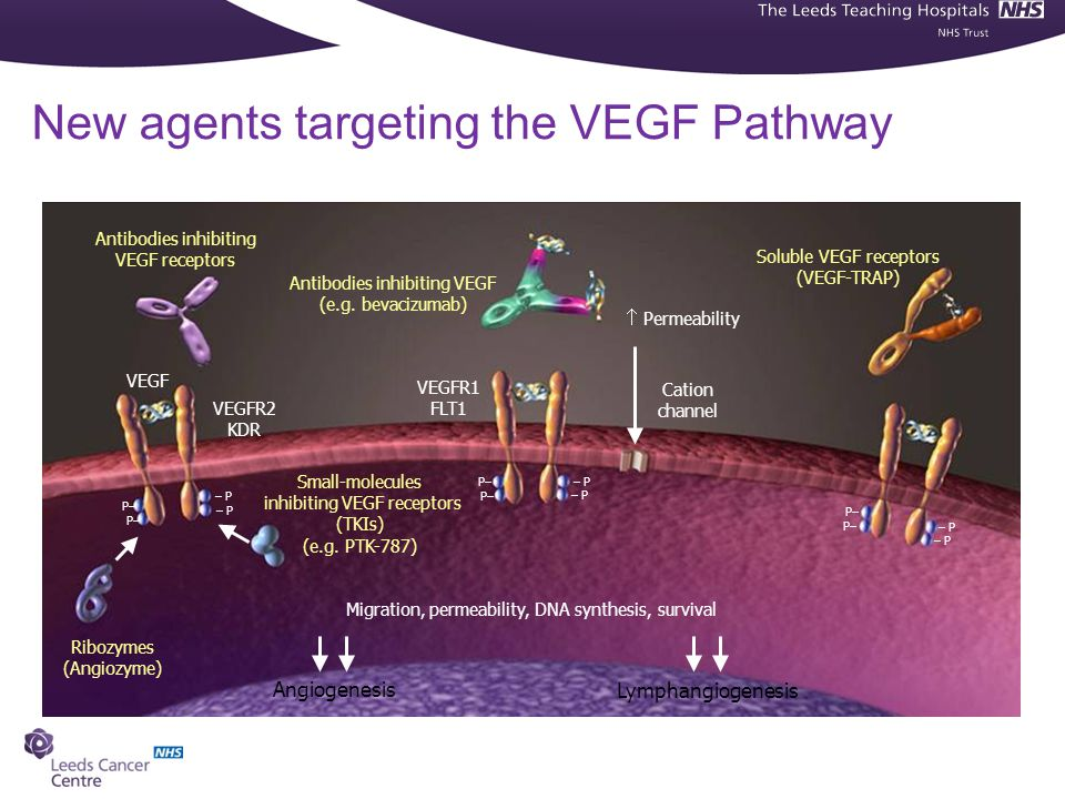 New agents targeting the VEGF Pathway
