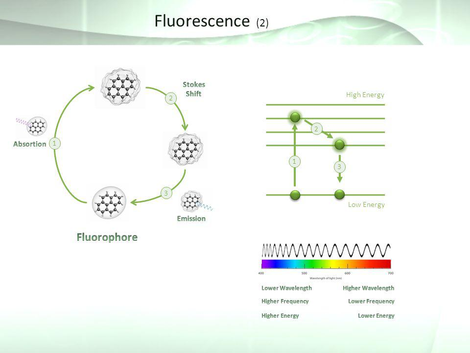 An introduction to the fluorescence study of the kinetics of energy