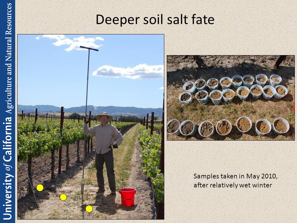 Deeper soil salt fate Samples taken in May 2010, after relatively wet winter