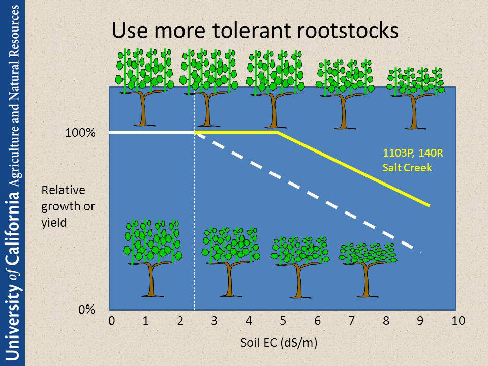 Use more tolerant rootstocks