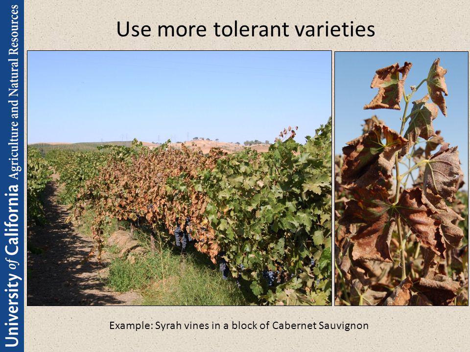 Use more tolerant varieties
