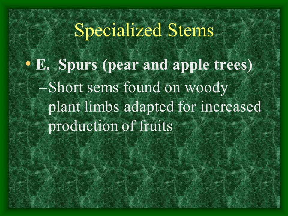 Specialized Stems E. Spurs (pear and apple trees)