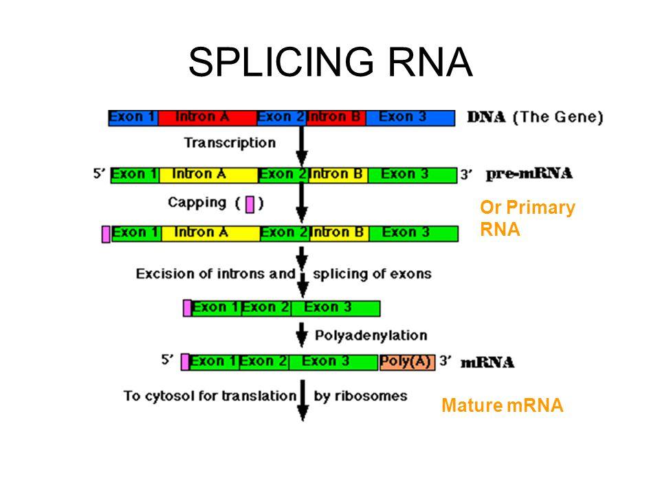 SPLICING RNA Or Primary RNA Mature mRNA