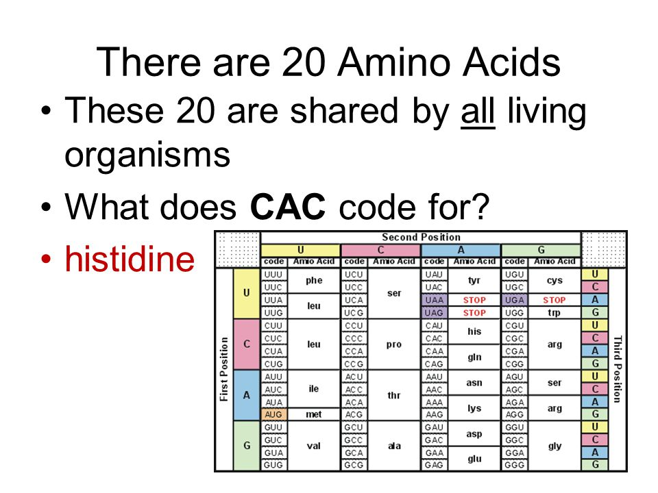 There are 20 Amino Acids These 20 are shared by all living organisms