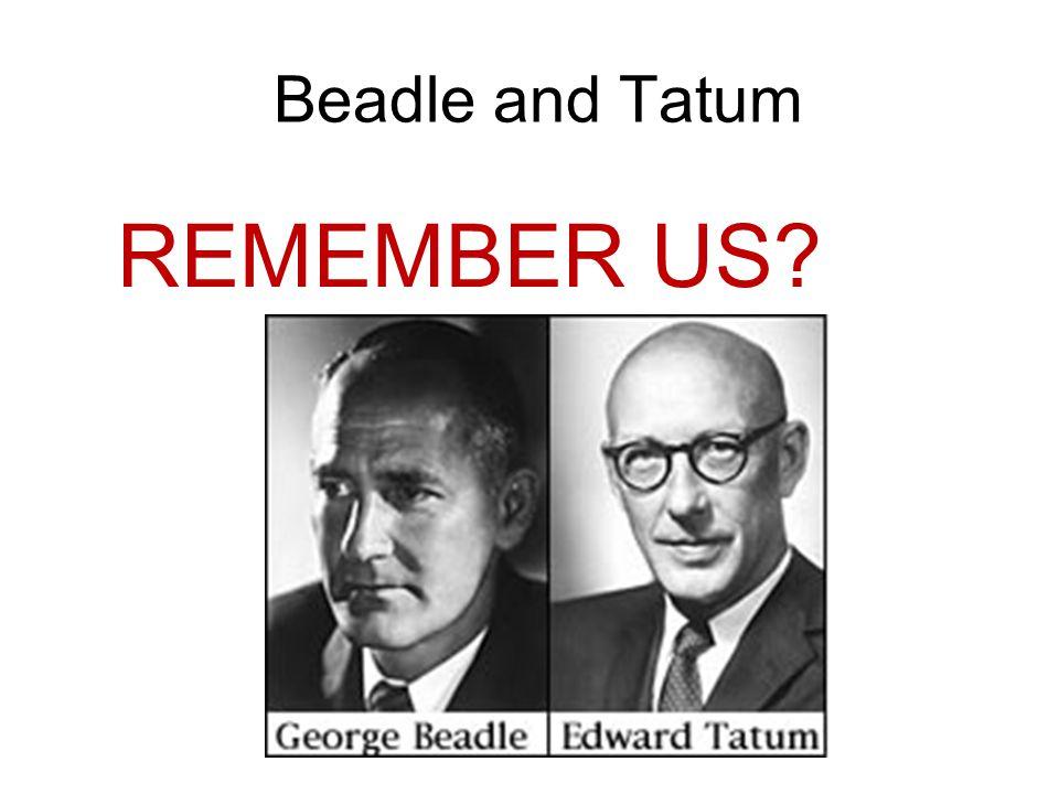 Beadle and Tatum REMEMBER US