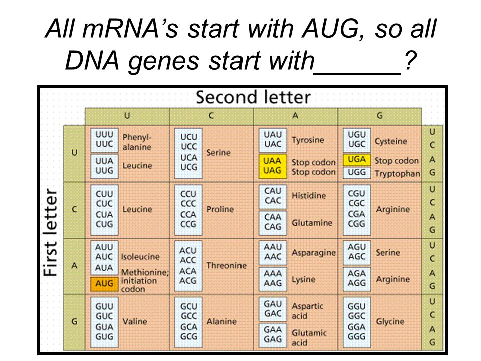 All mRNA's start with AUG, so all DNA genes start with______