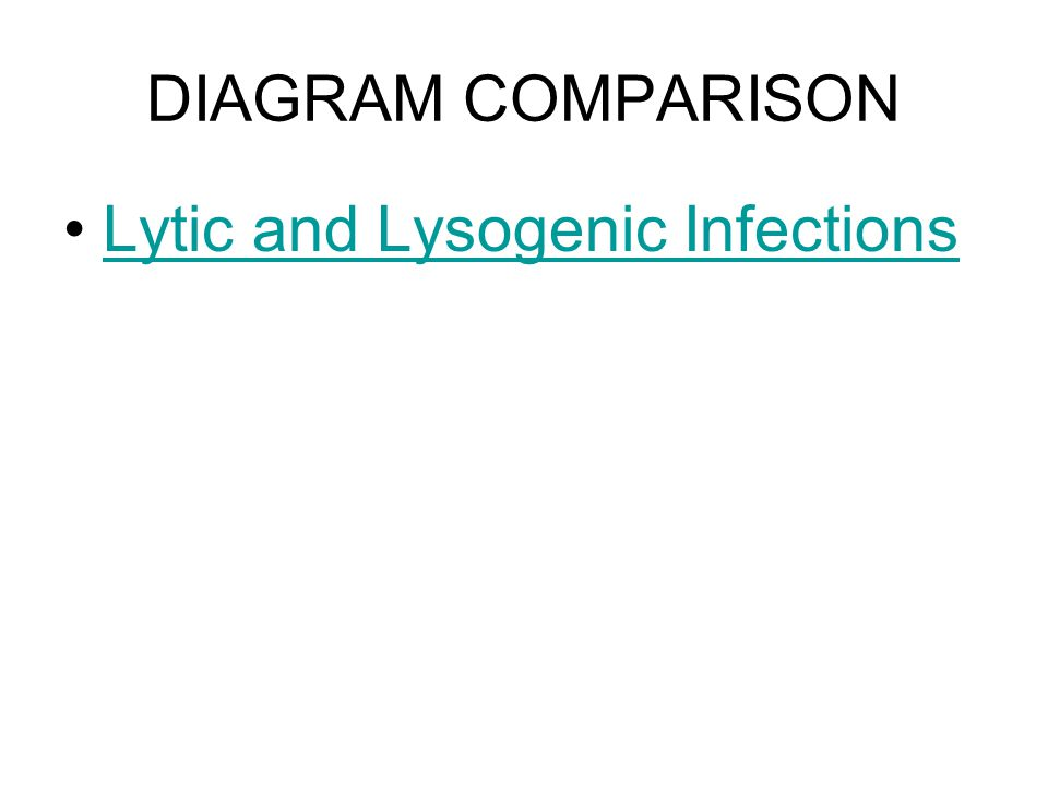 DIAGRAM COMPARISON Lytic and Lysogenic Infections