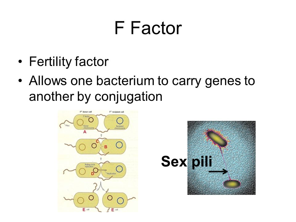 F Factor Sex pili Fertility factor