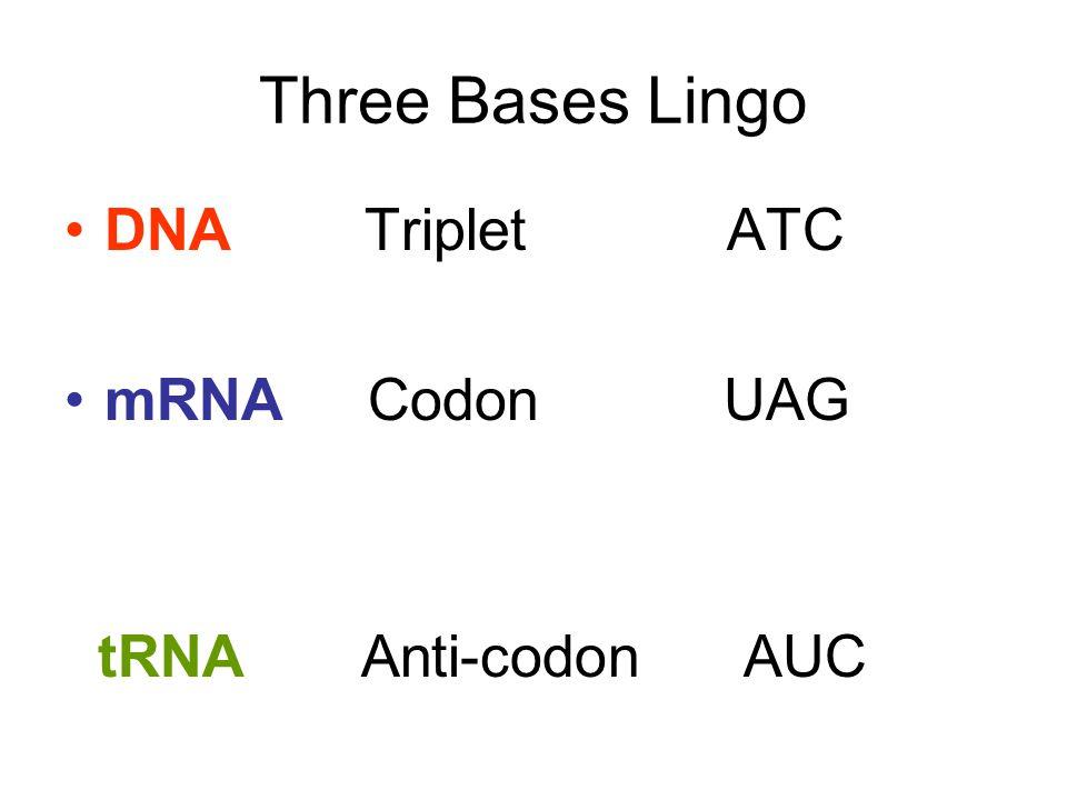 Three Bases Lingo DNA Triplet ATC.