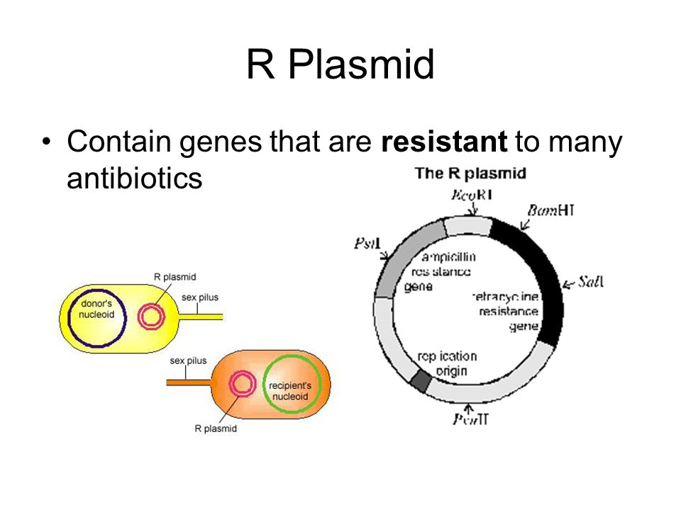 R Plasmid Contain genes that are resistant to many antibiotics