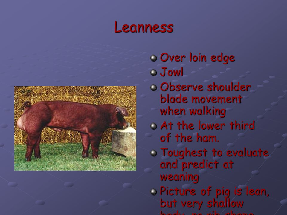 Leanness Over loin edge Jowl