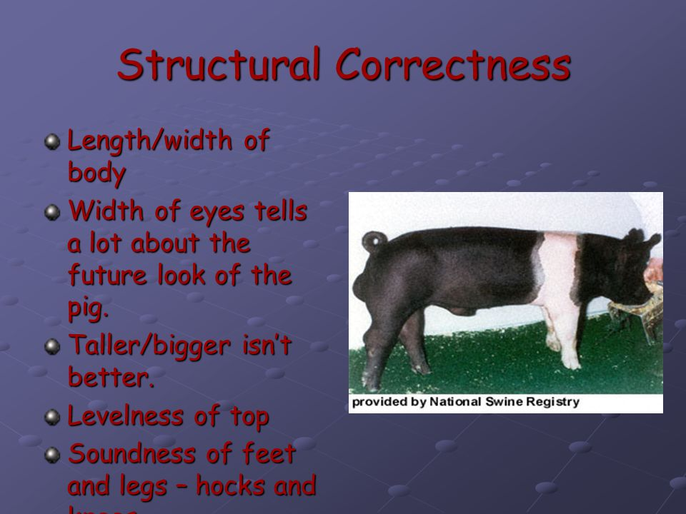 Structural Correctness