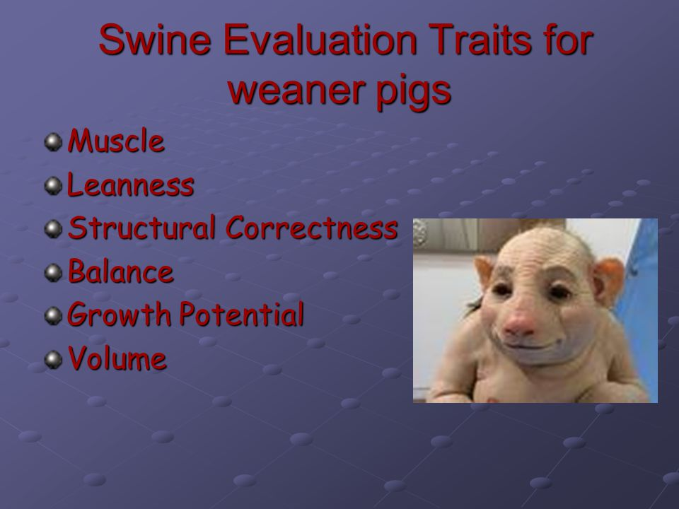 Swine Evaluation Traits for weaner pigs