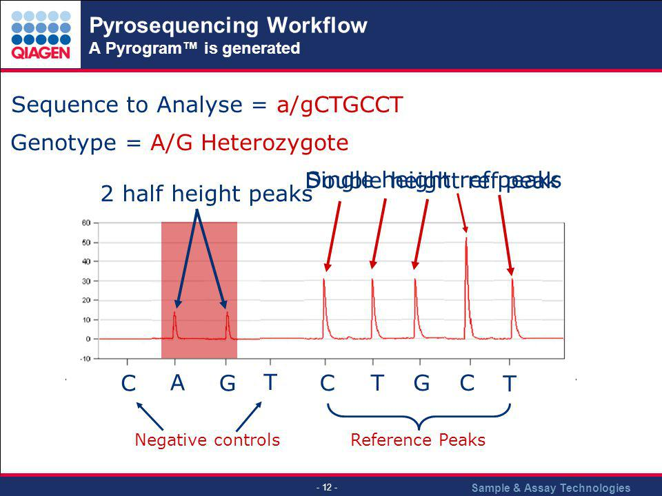 Pyrosequencing Workflow A Pyrogram™ is generated