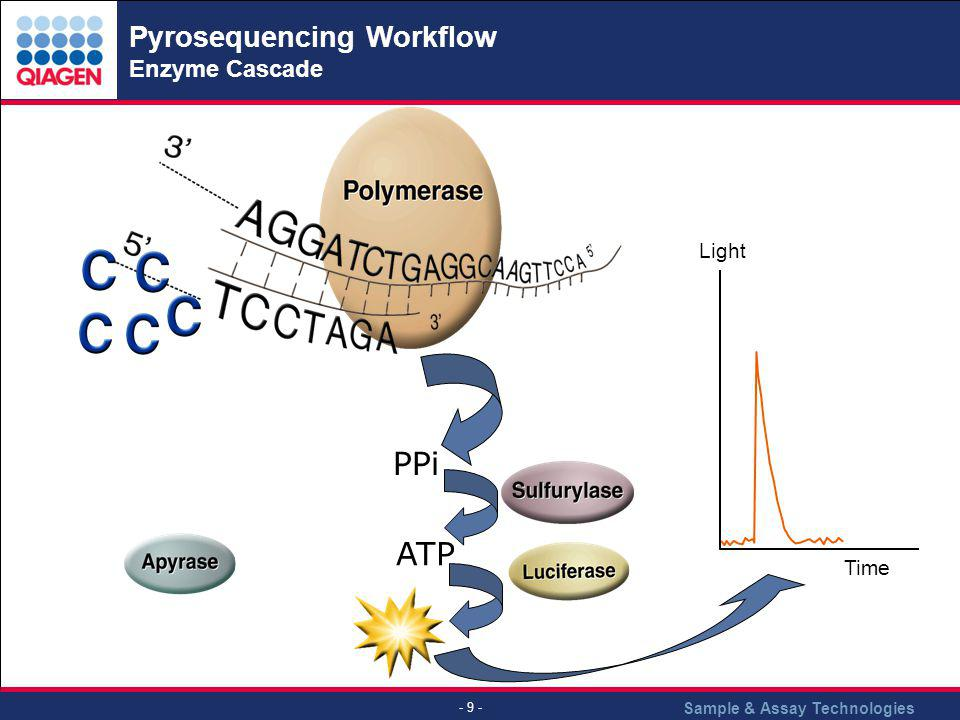 Pyrosequencing Workflow