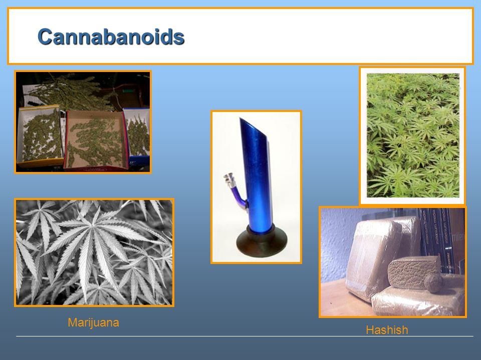 Cannabanoids Marijuana Hashish
