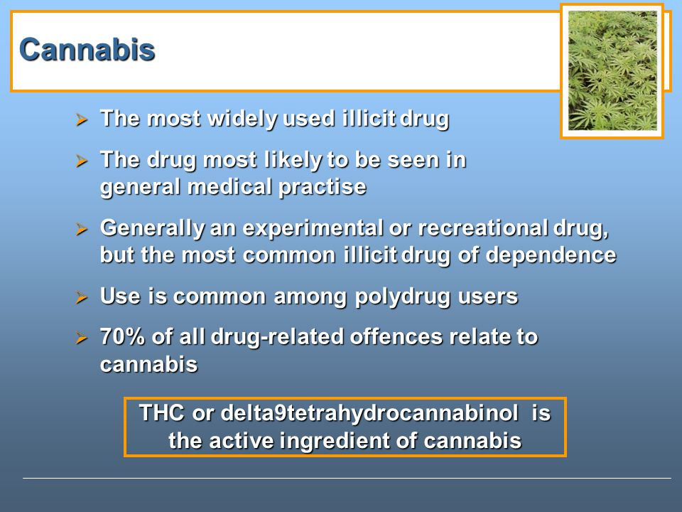 Cannabis The most widely used illicit drug