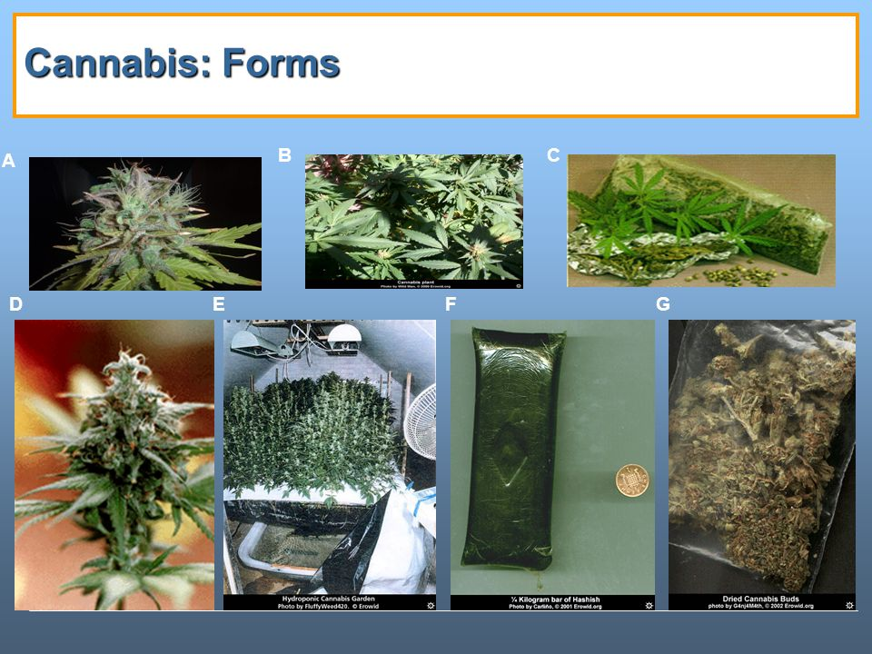 Cannabis: Forms A B C D E F G Notes