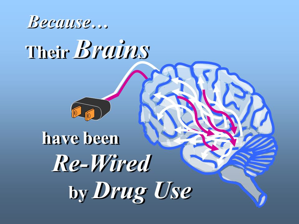 Their Brains have been Re-Wired by Drug Use Because…