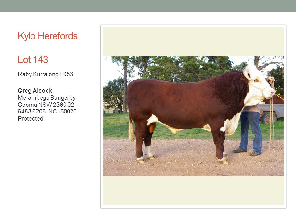 Kylo Herefords Lot 143 Raby Kurrajong F053